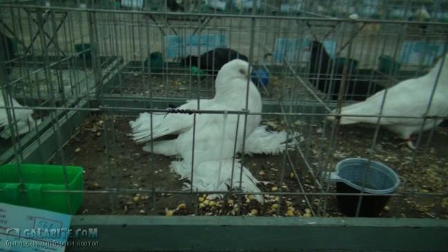 Снимка на гълъб